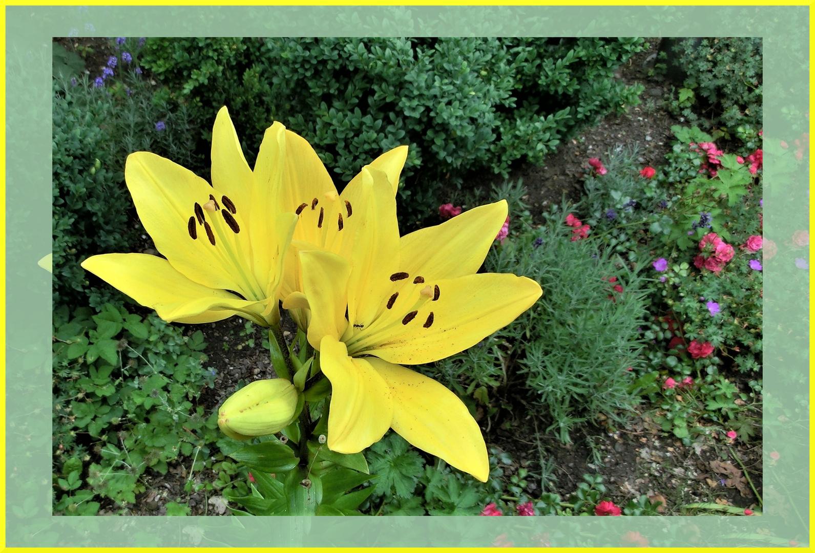 Blume im Stadtpark