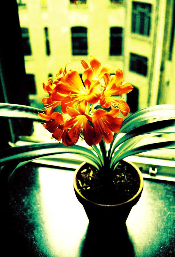 Blume im Treppenhaus