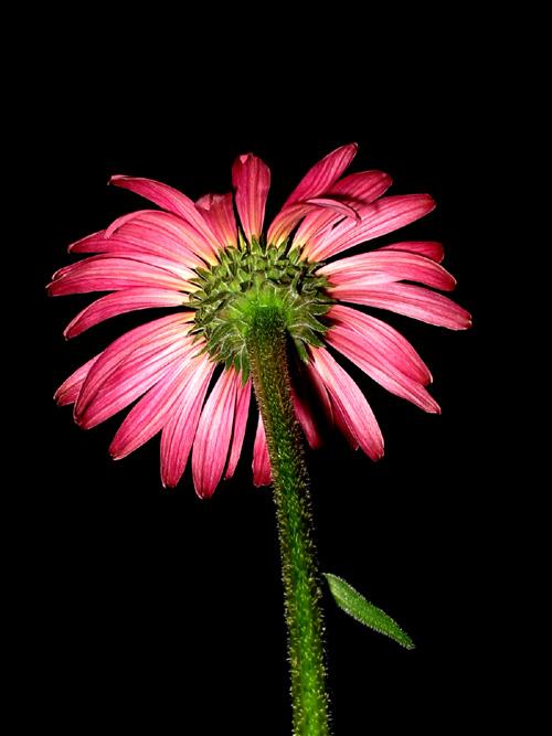 Blume in der Nacht