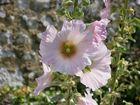 Blume in Frankreich