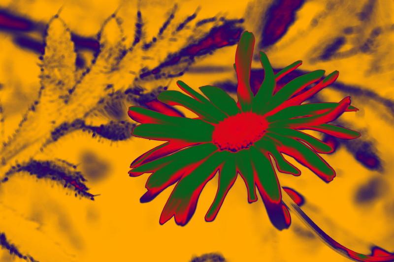 Blume in freier Natur
