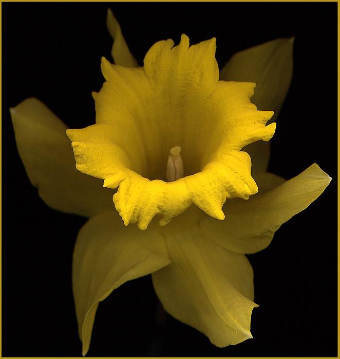 Blume in Gelb