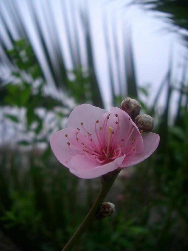 Blume in Viña de Mar