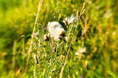 Blume lensbabystyle