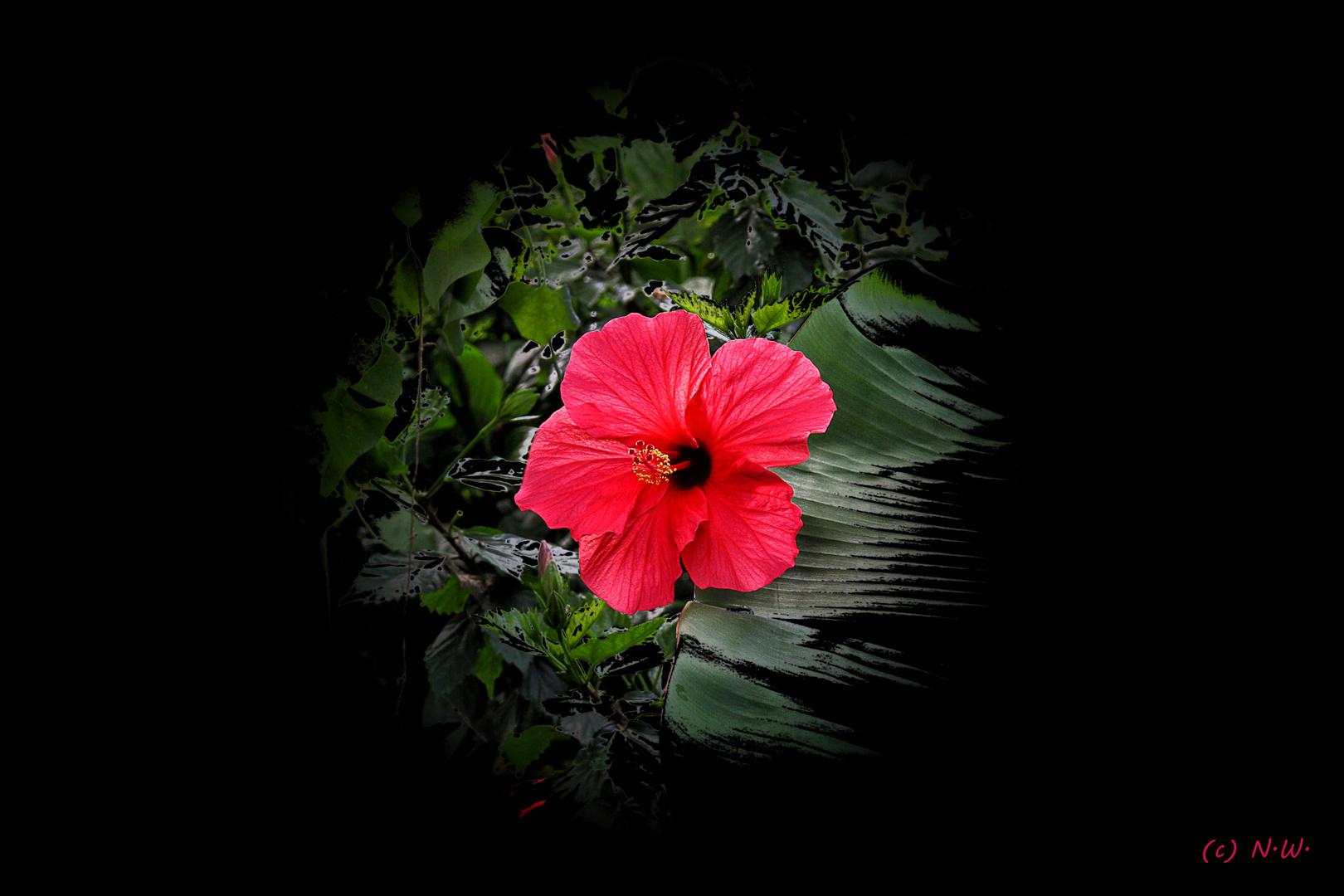 Blume mit bea