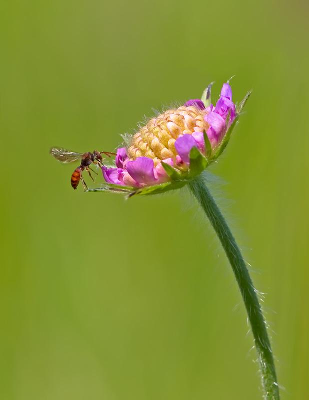 Blume mit Bienchen ..
