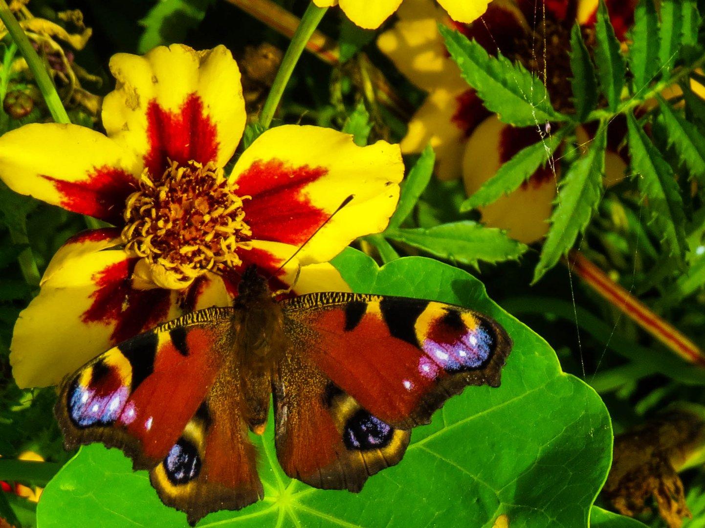 blume mit ein Schmetterling