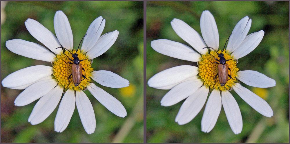 Blume mit Käfer