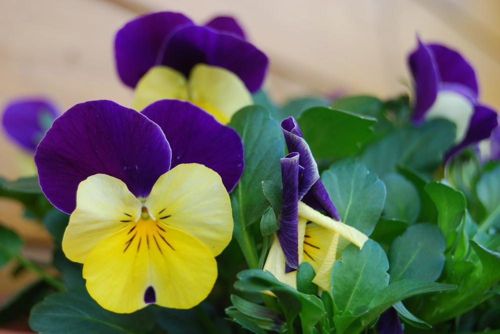 Blume mit schönen Farben