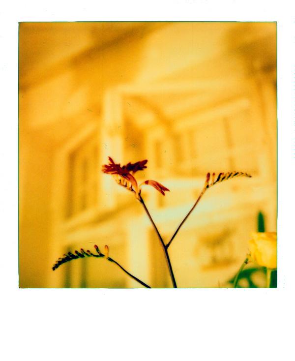 Blume , nur so , mit Scanfusseln