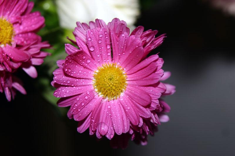 Blume + Sprühflasche