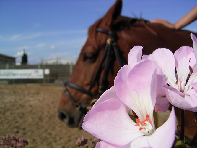 Blume und Pferd