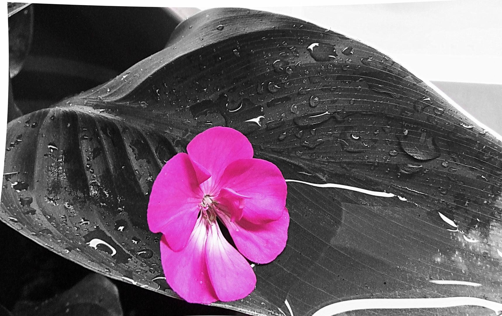 blume und schwarz weiss foto bild natur kreativ bea natur bilder auf fotocommunity. Black Bedroom Furniture Sets. Home Design Ideas