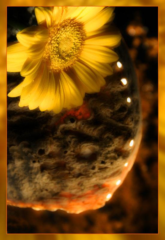 Blume vom Mars