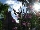 Blume vor Wormser Dom
