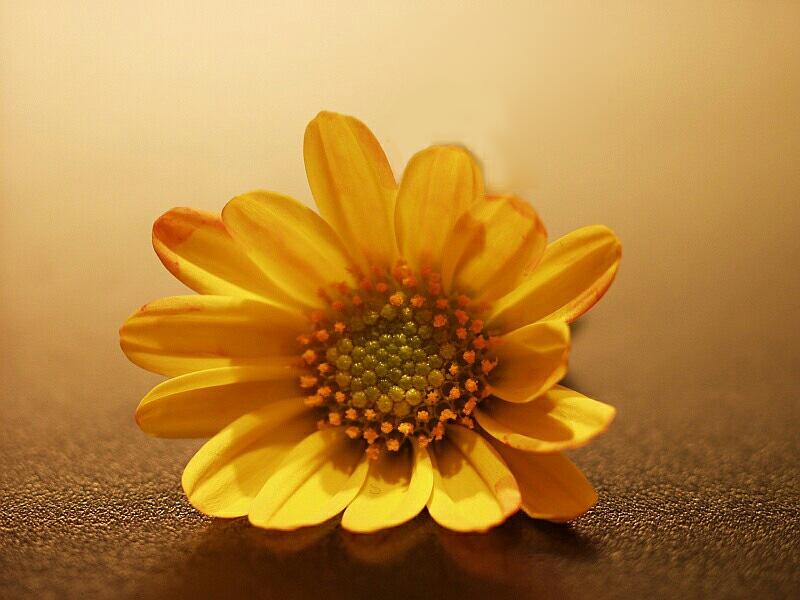 Blume, was für eine weiss ich auch nicht...