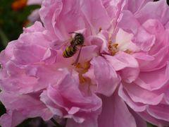 Blume & Wespe 3