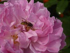 Blume & Wespe1