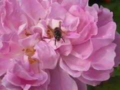 Blume & Wespe2