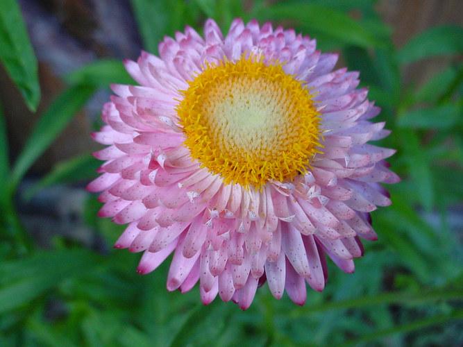 Blume1 Macro