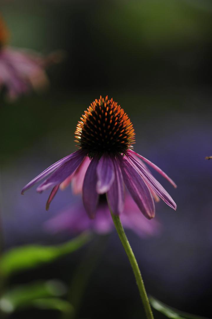 Blume(Botanischer Garten)