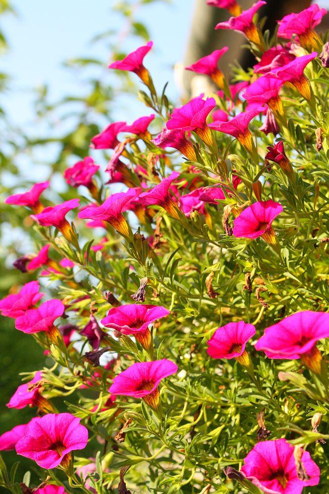 Blumeen :)