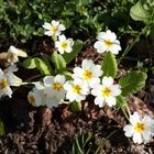 Blumem überall