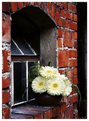 Blumen 002