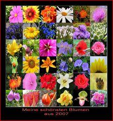 Blumen 2007