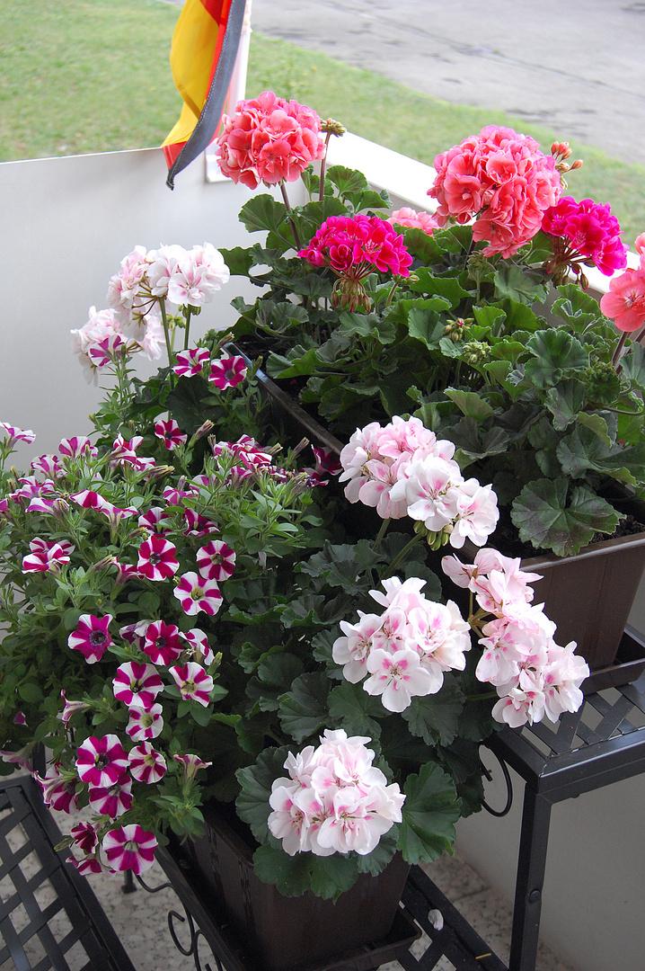 Blumen ....