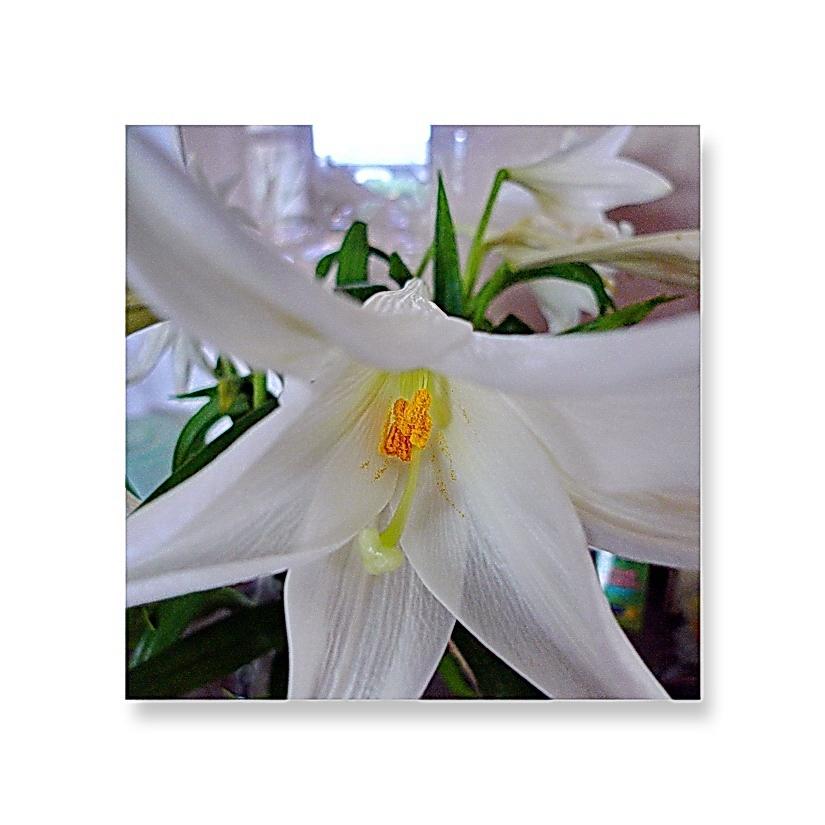 Blumen (als Mitbewohner) bringen Anmut ins Leben