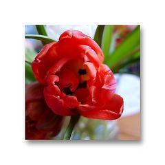 Blumen (als Mitbewohner) bringen Farbe ins Leben