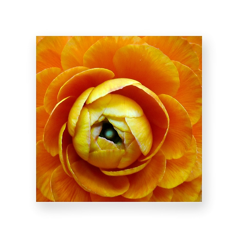 Blumen (als Mitbewohner) bringen Freude ins Leben
