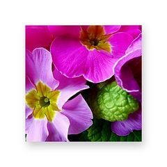 Blumen (als Mitbewohner) bringen Fröhlichkeit ins Leben