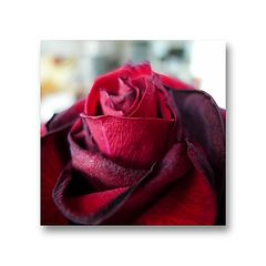 Blumen (als Mitbewohner) bringen Gefühle ins Leben
