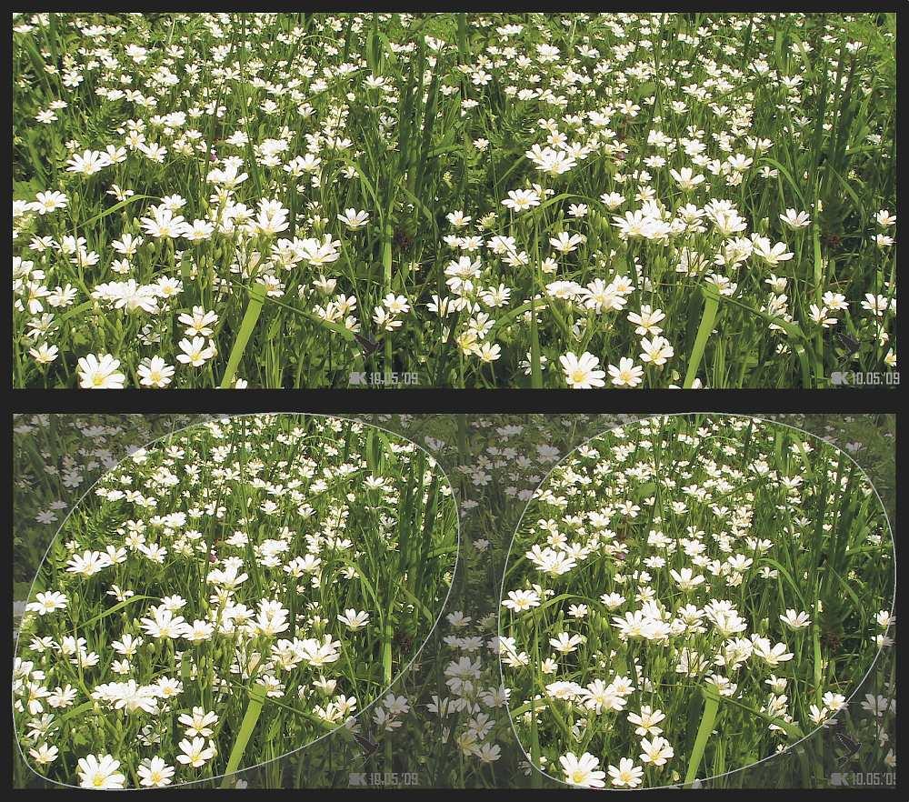 Blumen am Bach