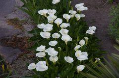 Blumen am Canal de Midi