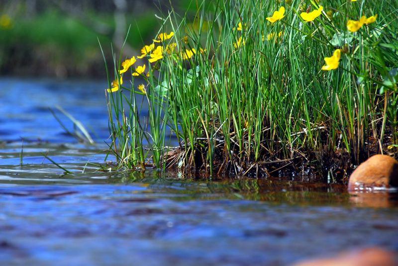Blumen am Fluss