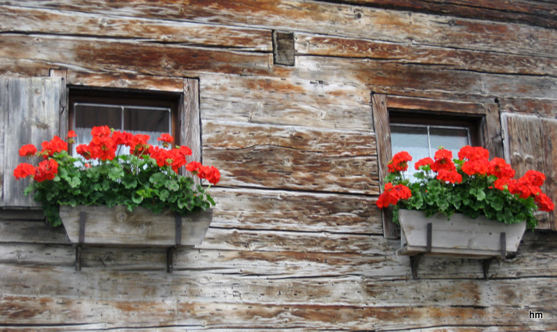 Blumen am letzten Stadel in Serfaus (A)