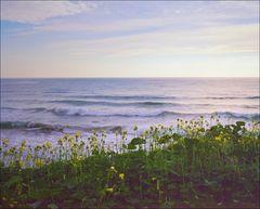 Blumen am Meer
