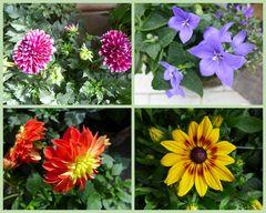 Blumen am Mittwoch