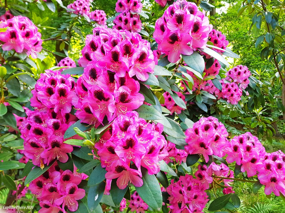 Blumen am Schwanenweiher in Bad Bergzabern