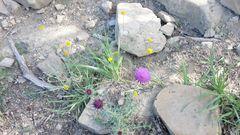 Blumen am Wegesrand 1