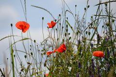 Blumen am Wegesrand-4