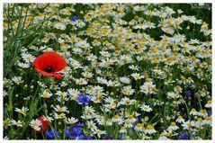Blumen am Wegesrand für den Sonntag !