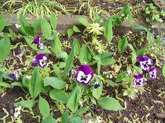 Blumen am Weimarer Friedhof