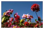 Blumen auf der BUGA