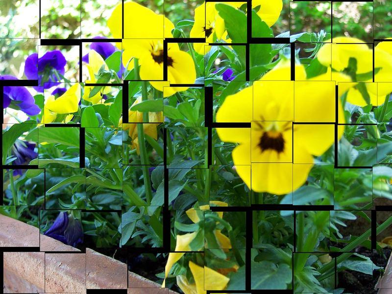Blumen auf meiner Terrasse // Las flores de mi terraza.