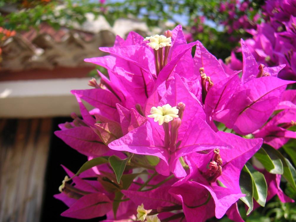 Blumen auf Zakynthos