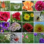Blumen aus 2010